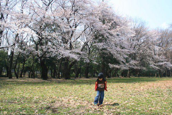 "Fig. 2.0 ""Desmond Speta playing around near Setagaya-ku, Tokyo with background of the beautiful Sakura trees blossoming in full today.  Image Courtesy: Robert Speta."""